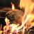 飲み放題付◆全9品 堪能4000円コース◆藁と鶏由で焼き上げる もも焼き