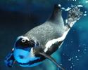"Lunch Course Menu ""Ciel"" with ticket for the Kyōto Aquarium 【Adult】"