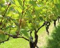 Mannz Wine·Solaris沙龍