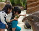 [Saturdays, Sundays, and holidays lunch] Kobe Animal Kingdom Admission & GOCOCU Lunch [Elementary school Children]