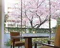 【土日祝日限定!】桜が見える席確約。乾杯ロゼスパークリング付き!前菜や魚料理、メインなど全5品!春を楽しむ贅沢ランチ