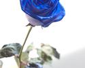 【Blue rose Applause(ブルーローズ アプローズ)1輪】